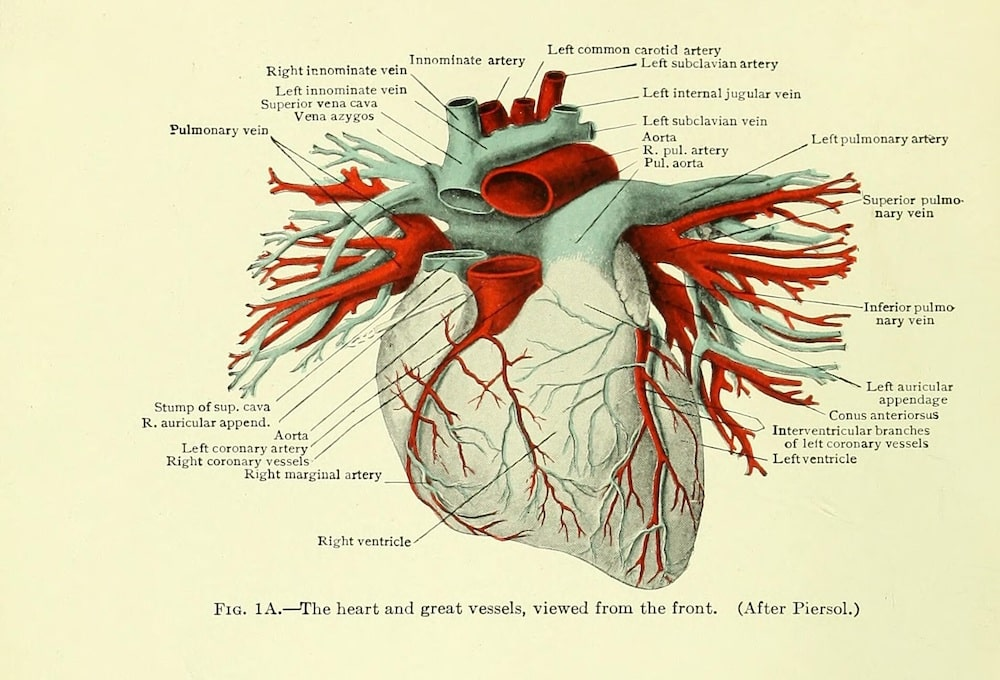 Diseases of the heart and aorta. Arthur Douglass Hirschfelder, published Philadelphia, 1913