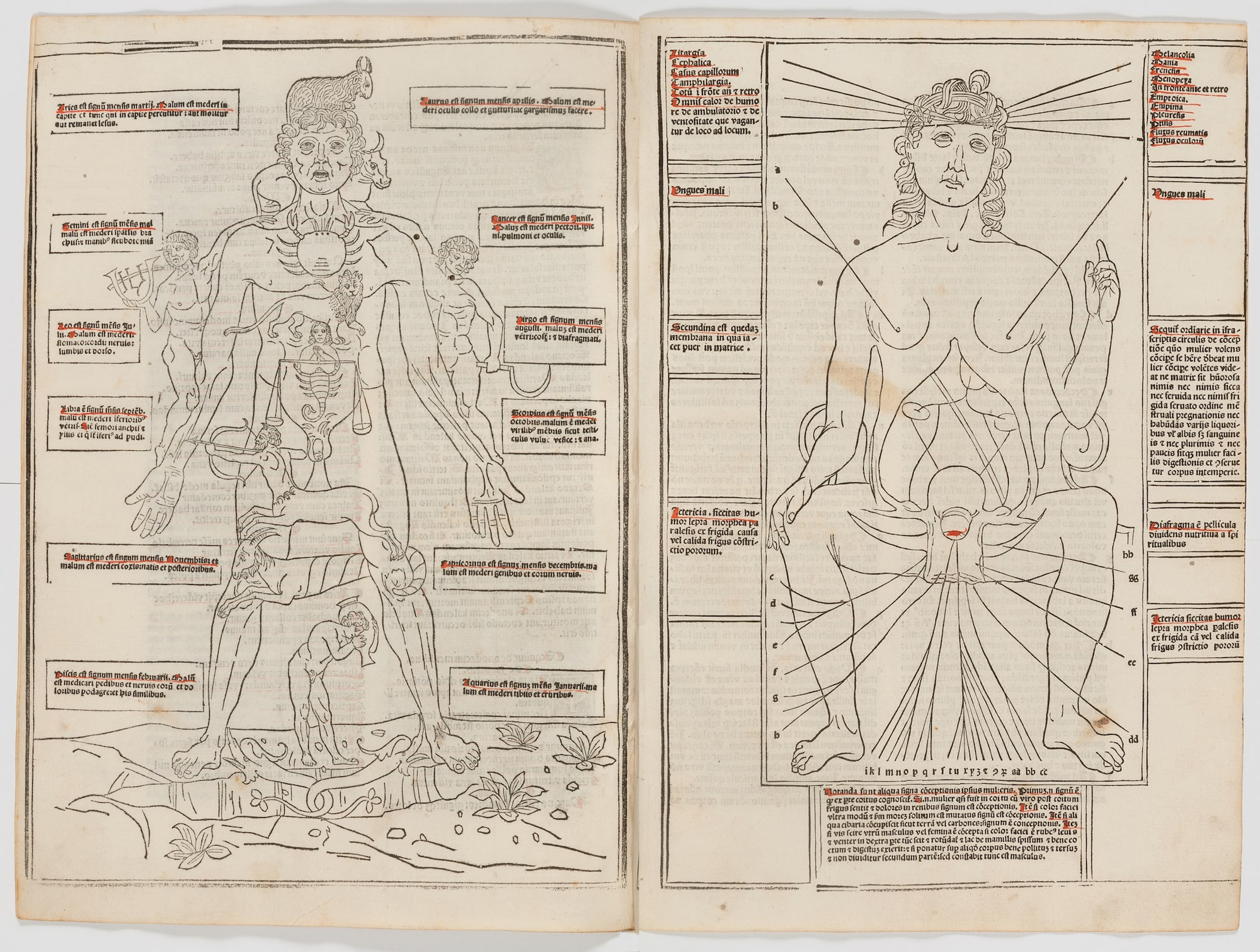 Diagram of a male body and signs of the zodiac on the left, diagram of the female body on the right.