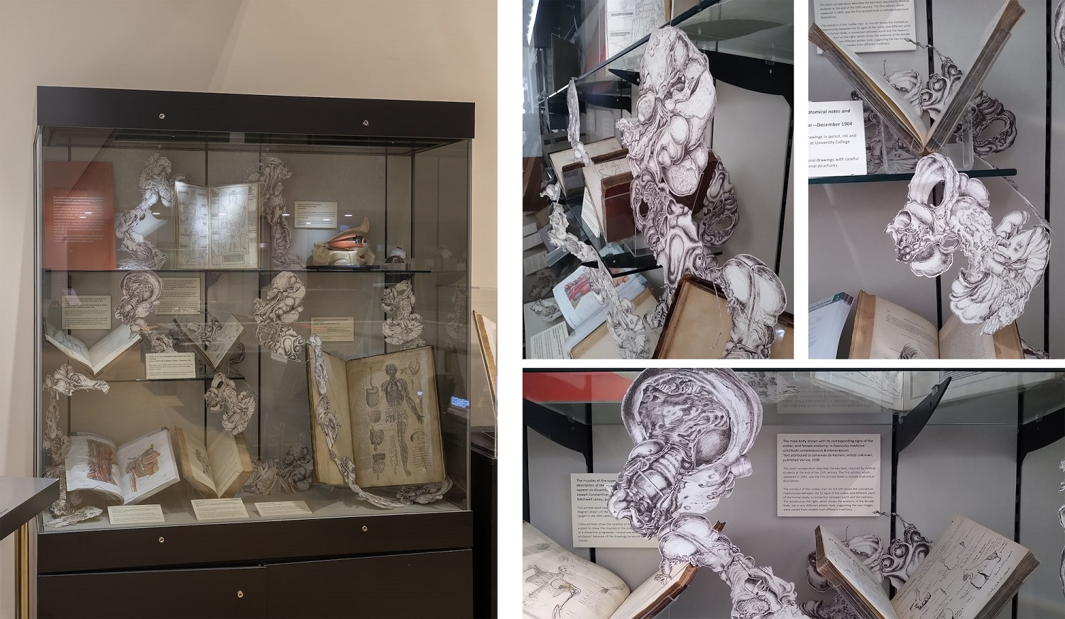 Composite drawings of anatomical illustrations, intertwined with a museum display of open books.