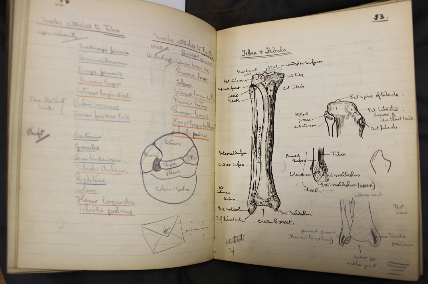 Exercise book with hand drawn illustrations of bones of the lower leg.