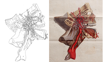 Black and white and colour images of blood vessels in the head and neck.
