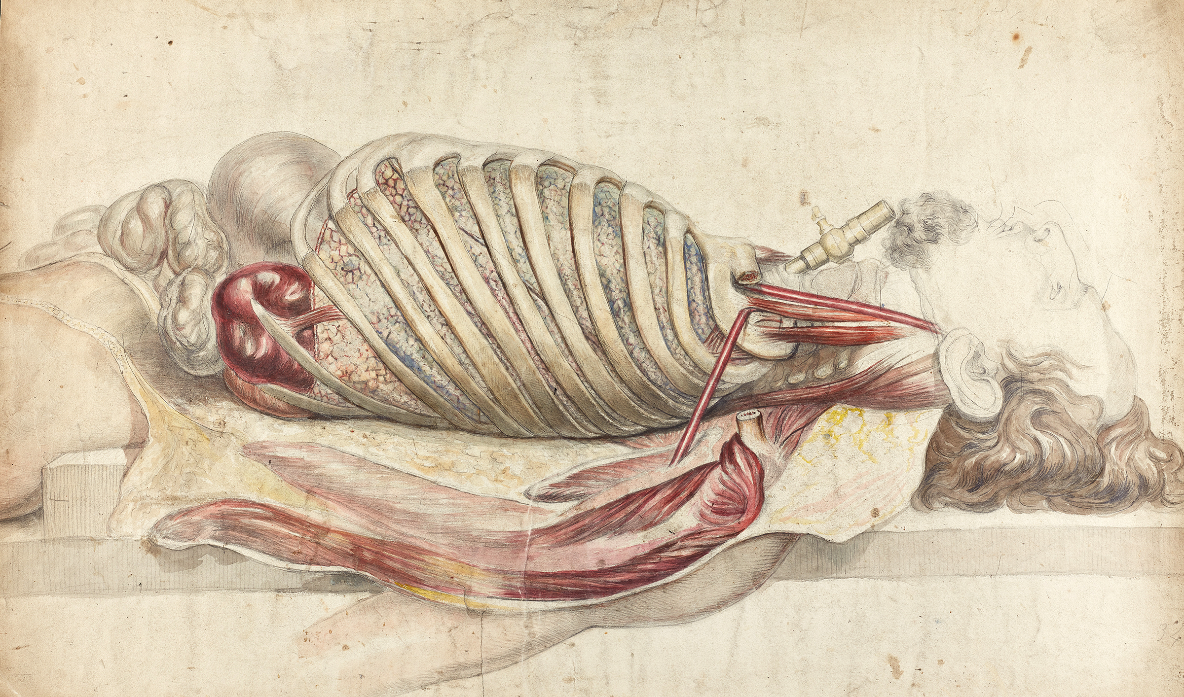 Medical anatomy drawing