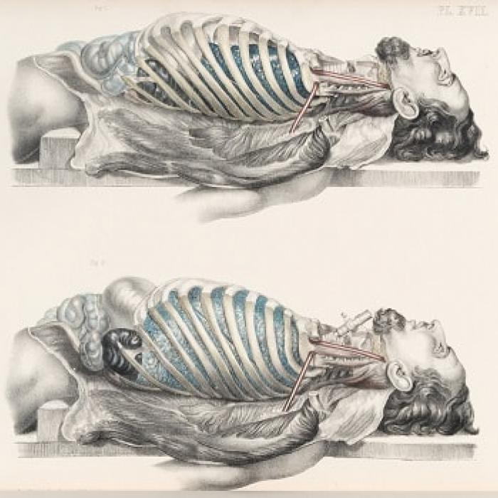 Anatomy of the male torso by Francis Sibson, 1869