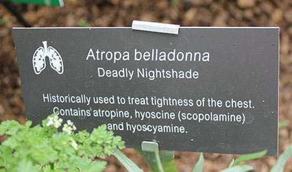 Plant label in a garden. Label reads: 'Atropa belladonna. Deadly nightshade. Historically used to treat tightness of the chest. Contains atropine, hyoscine (scopolamine) and hyoscyamine.'