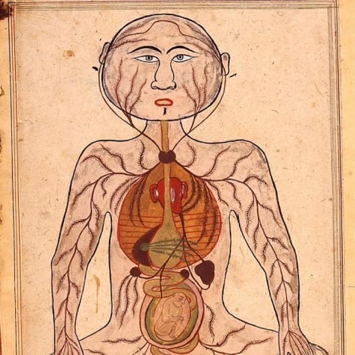 Manṣūr's Anatomy, female reproduction, 1656