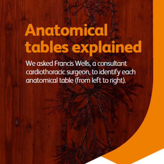 anatomy tables explained