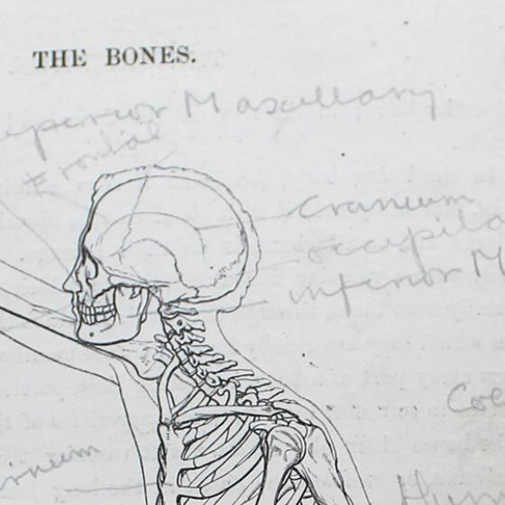 Line drawing of the human skeleton (head and shoulders) with annotations around it in pencil.